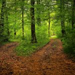 MArche Afghane Forêt2